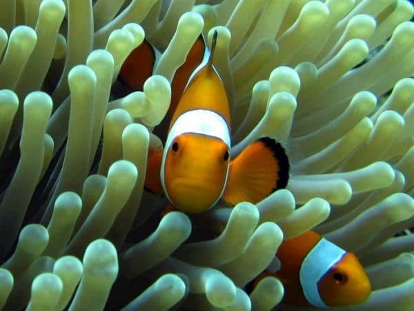 Best Diving Bali