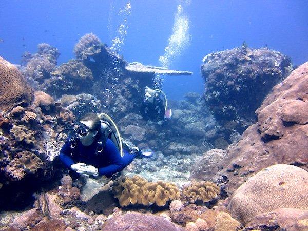 Fun Diving_Vivid